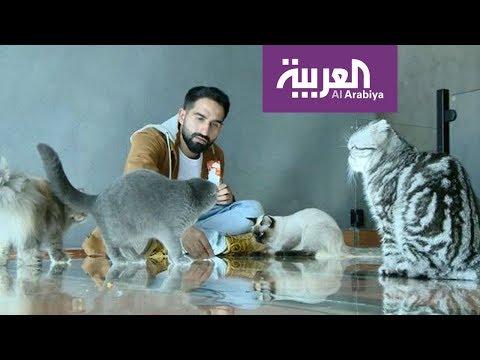 شركه انجزنى ارخص شركة مكافحة حشرات بالرياض| شركه انجزنى بالرياض – صباح العربية | مقهى للقطط في جدة