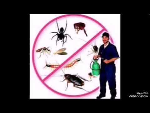 شركة تنظيف المنازل بالرياض | شركه انجزنى – شركة تنظيف منازل بشرق الرياض 0507570933 ؛ مكافحة حشرات