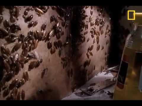شركة رش مبيدات بالرياض – شركة رش مبيدات الحشرات من المنازل أضواء المنارة