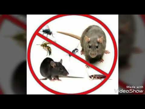 شركة رش مبيدات بالرياض – شركة رش مبيد حشرات شمال الرياض 0507624500 ( الورود ) مكافحة حشرات شمال الرياض بالدمام