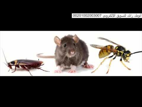 شركة رش مبيدات بالرياض – شركة رش مبيد حشرى بالرياض 0551128002