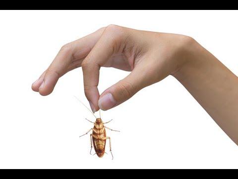 شركة رش مبيدات بالرياض – افضل شركة رش مبيدات ومكافحة حشرات 0555620378