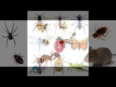 شركة رش مبيدات بالرياض – شركة رش مبيدات بالخرج 0508939018 مكافحة حشرات بالخرج