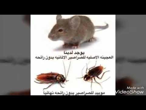 شركة رش مبيدات بالرياض – شركة رش مبيدات بالرياض 0507624500 (شركة الورود )