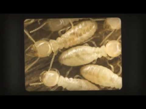 شركة رش مبيدات بالرياض – شركة رش مبيدات بالرياض