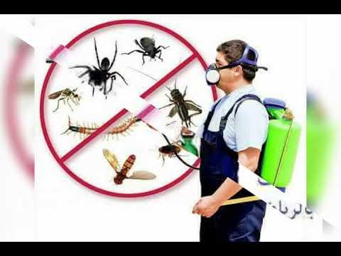 شركة رش مبيدات بالرياض – شركة رش مبيدات لجميع الحشرات الصفرات بالرياض 0549292017