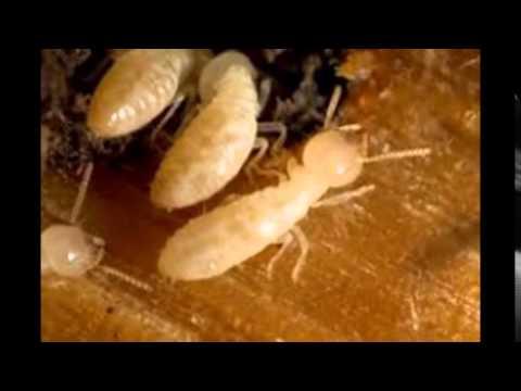 شركة رش مبيدات بالرياض – شركة رش دفان بالرياض0541863669شركة مكافحة حشرات ومكافحة النمل الابيض ورش مبيدات بالرياض